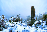 Sonoran Desert Whiteout