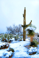 Sonoran Desert Whiteout III