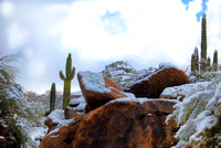 Sonoran Desert Whiteout XI